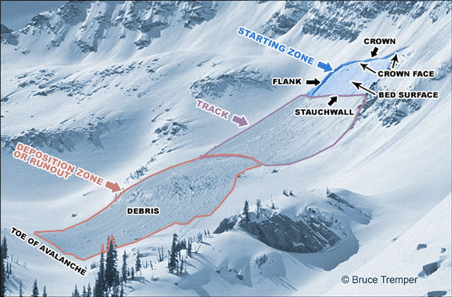 identifying the different parts of an avalanche